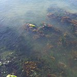 Clear water you can see the fish