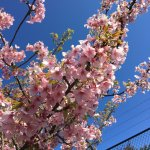 Hatsushima Photo