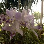 A flowering orchid in the garden