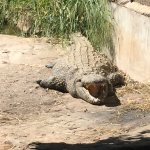 Photo of Croc Farm
