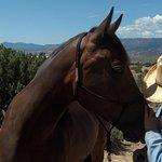 In Sync with Horses صورة فوتوغرافية