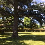 Ancient trees in the formal gardens