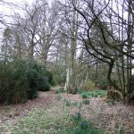 In the grounds - lovely woodland