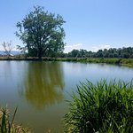 Whitman's pond / grist mill