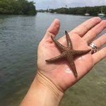 You never know what you might find in a glass bottom kayak, or on a glass bottom kayak tour!