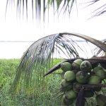 Photo of Eco Resort