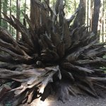 Foto de Armstrong Redwood State Reserve