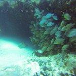 vida marina que encontramos en los arrecifes de Playa del Carmen