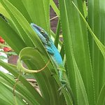 a beautiful lizard in the plants in the courtyard