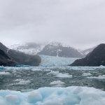 Foto de Whale Song Cruises