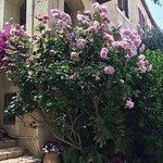 Mishkenot Sha'ananim - flowers (6)