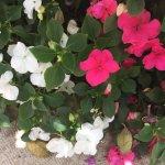 Mishkenot Sha'ananim - flowers (7)