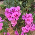 Mishkenot Sha'ananim- flowers (8)