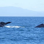 Foto de Blue Ocean Whale Watch