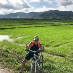 small cycle lanes through paddy fields