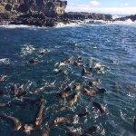 Seals at Phillips Island = Wildlife Coast Cruises