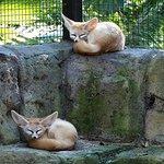 Photo of Billabong Zoo: Koala & Wildlife Park