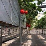 Nakajima Farm Strawberry Land Foto
