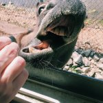 Foto de Wild Animal Safari
