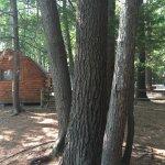 Basic campground site