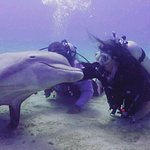 Foto de Roatan Institute for Marine Sciences - Anthony's Key Resort