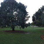 Dendy Park