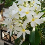 Photo of LivingRoom by Seasons