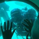 Submarine Safaris Foto