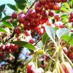 Photo of Westonbirt Arboretum