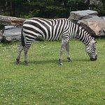 Foto de Granby Zoo (Zoo de Granby)
