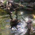 Zoo Karlsruhe Foto