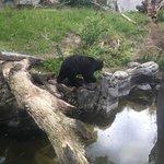 Photo de Frankfurt Zoo (Zoologischer Garten Frankfurt/Main)