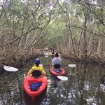Kayaking through the mangroves!