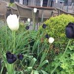Unusual tulips!