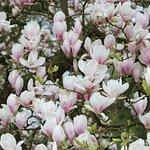 Bremen - Rhododendronpark 3