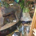 Brookside Nature Center Image