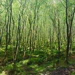 forest in Glendalogh