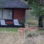 Foto de Mohlabetsi Safari Lodge