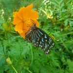 Photo de Kep Butterfly Farm