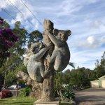 Billabong Zoo: Koala & Wildlife Park