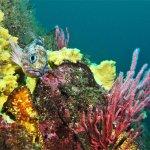 Mucha vida y muchos colores pueden ser encontrados en nuestra privilegiada Bahía