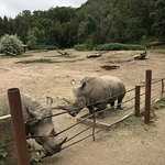 Photo de Safari West