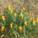 Antelope Valley California Poppy Reserve, Lancaster, Ca
