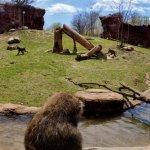 Foto de Toronto Zoo