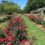 The rose garden at the Botanical gardens