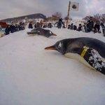 Penguins march