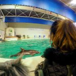 After the show, dolphins showing some attitude