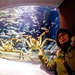 Crabs tank