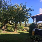 Limonero en parte de la zona de jardín, cenador y terraza.