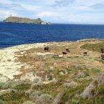 Promenades sur le sentier des douaniers du Cap-Corse. Paysages et Flore diverse vue sur l'île de